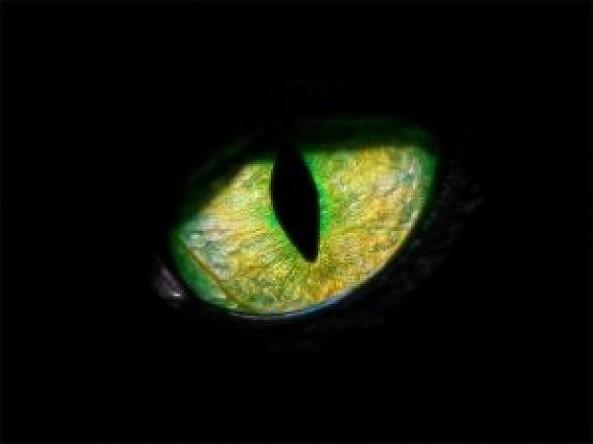 panther-eye_21028570[1]